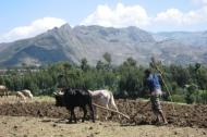 Korem farming